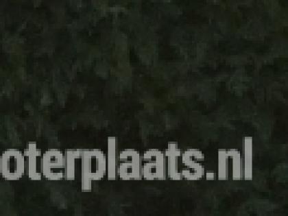 CLASSIC BROMFIETS KREIDLER EITANK 1966 K54